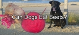 Can Dogs Eat Beets – Find Whether You Dog Can Eat Beets or Not