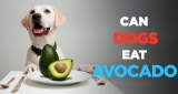 Can Dogs Eat Avocado – Find Whether You Dog Can Eat Avocado or Not