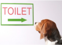 How Long Can A Dog Go Without Pooping